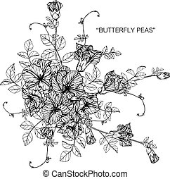 Bouquet of butterfly pea flowers drawing.