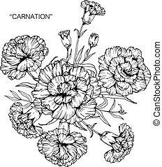 Bouquet of carnation flowers drawing.