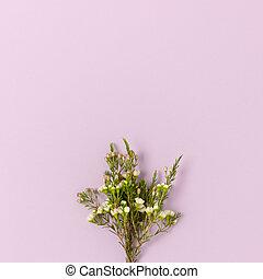 Bouquet of chamelaucium flowers on a purple pastel background.
