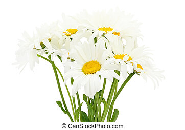 Bouquet of chamomile flower