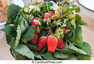 Bouquet of chamomile flowers and strawberries