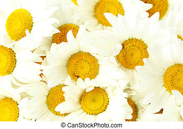 Bouquet of chamomile flowers, background