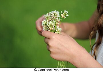 Bouquet of clover in girls hands