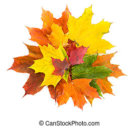 Bouquet of colorful autumn maple leaves on a white background.