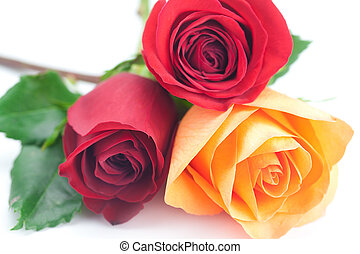 bouquet of colorful roses isolated on white