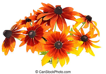 Bouquet of colorful rudbeckia flowers