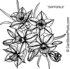 Bouquet of daffodil flowers drawing.