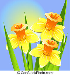 Bouquet of daffodils on a blue backgroun