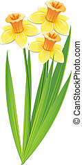 Bouquet of daffodils over white. EPS 8, AI, JPEG
