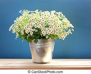 bouquet of daisies in a bucket on a blue background.