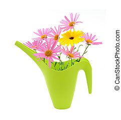 Bouquet of daisies in a watering ca