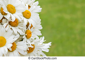 Bouquet of daisies on a green background.