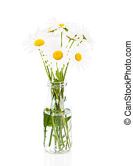 bouquet of daisies on a white background