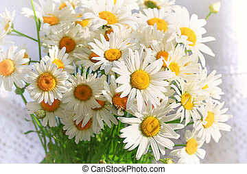 bouquet of daisies on a white background Spring composition