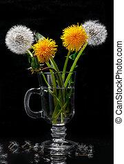 Bouquet of dandelions on a black background