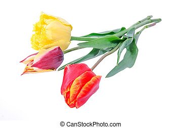 Bouquet of different tulips