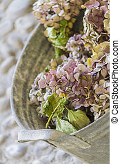 bouquet of dried hydrangeas