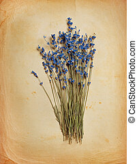Bouquet of dried  lavender on old paper