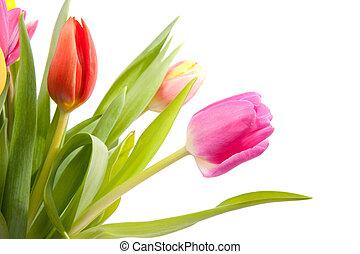 bouquet of Dutch tulips in closeup