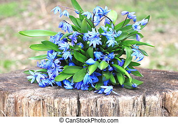Bouquet of first spring flowers