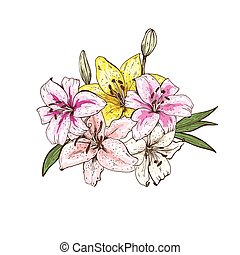 Bouquet of five colorfull lily flowers hand drawn isolated on white background. Vector illustration.