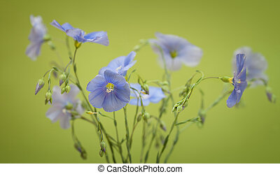 Bouquet of flax flowers