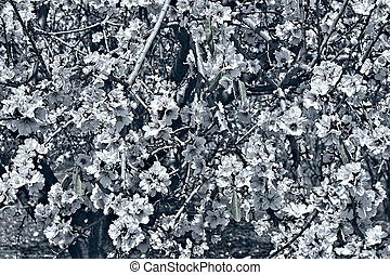 Bouquet of Flowering Almond as Background, Stylized Photo
