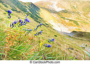Bouquet of flowers in the mountains