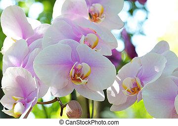 Bouquet of flowers orchids