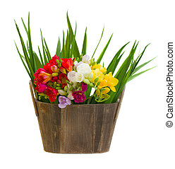bouquet of freesias flowers in wooden pot