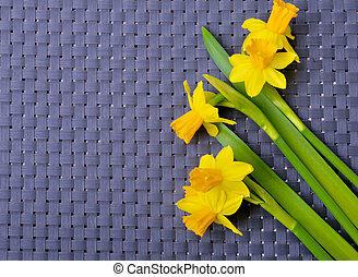 Bouquet of fresh spring narcissus flowers.