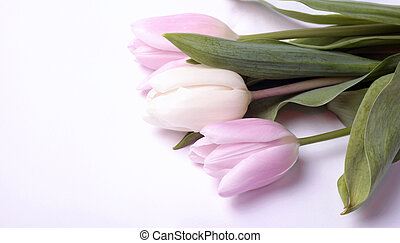bouquet of fresh spring white and pink tulip flowers on white background, selective focus