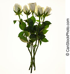 Bouquet of fresh white roses closeup on a white background. Background for greeting card with place for text