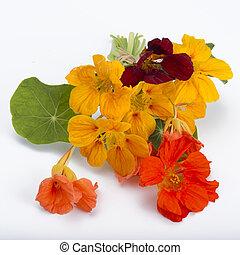 bouquet of garden nasturtium