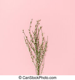 Bouquet of genista flowers on a pink pastel background.