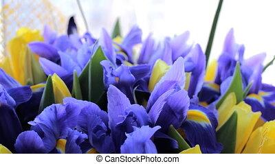 Bouquet of irises with tulips - Beautiful bouquet of irises...