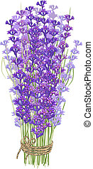 Bouquet of lavender - Colorful branches of lavender tied...