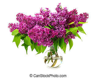 bouquet of lilac in a glass vase isolated on white background