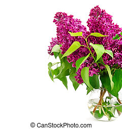 Bouquet of lilac in a vase isolated on white background. Free space for text.
