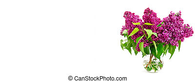 Bouquet of lilac in a vase isolated on white background. Free space for text. Wide photo.
