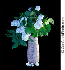 Bouquet of lilac on a black background