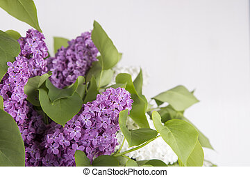 Bouquet of lilac on white background