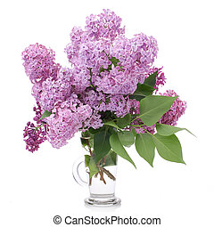 Bouquet of Lilacs in a Glass Vase isolated on white. Branch with Lilac Flowers.