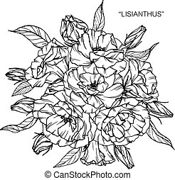 Bouquet of lisianthus flowers drawing.