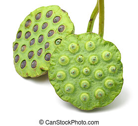 Bouquet of Lotus seed pod