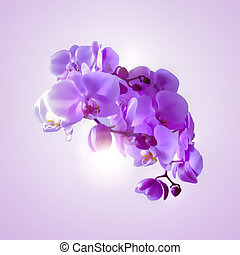 Bouquet of magenta orchids