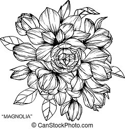 Bouquet of magnolia flowers drawing.