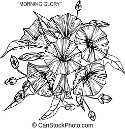 Bouquet of morning glory flowers drawing.