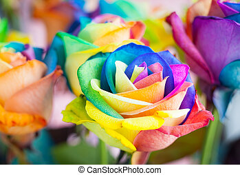bouquet of multi-colored roses (Rainbow rose)