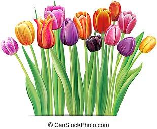 Bouquet of multicolor tulips